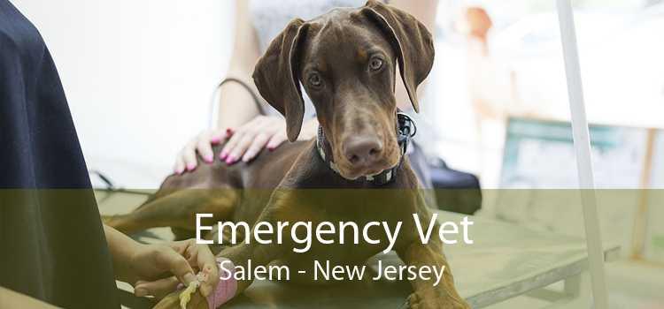 Emergency Vet Salem - New Jersey