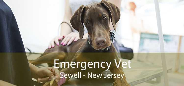 Emergency Vet Sewell - New Jersey
