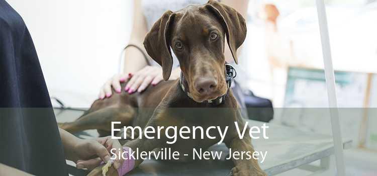 Emergency Vet Sicklerville - New Jersey