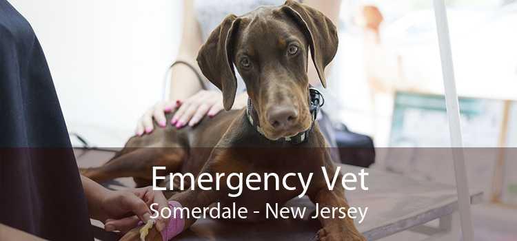 Emergency Vet Somerdale - New Jersey