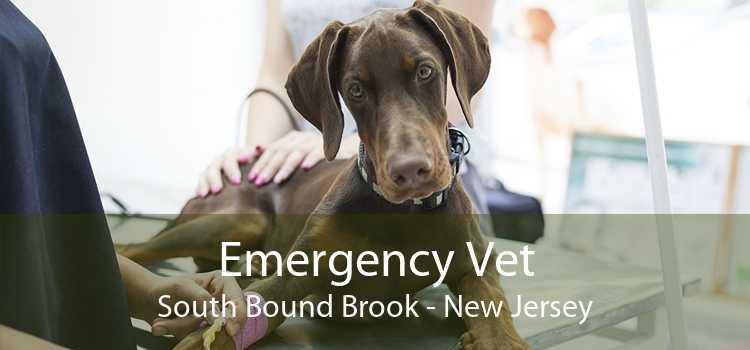 Emergency Vet South Bound Brook - New Jersey