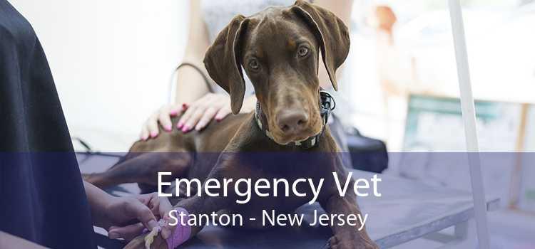 Emergency Vet Stanton - New Jersey