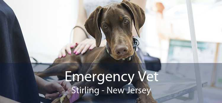 Emergency Vet Stirling - New Jersey