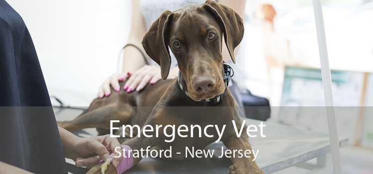 Emergency Vet Stratford - New Jersey
