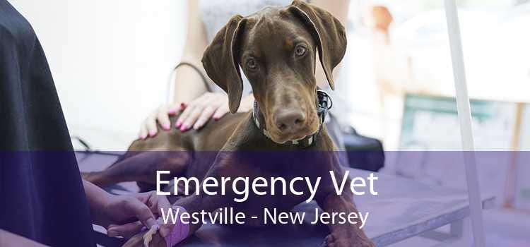 Emergency Vet Westville - New Jersey