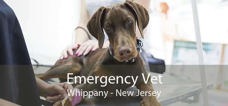 Emergency Vet Whippany - New Jersey