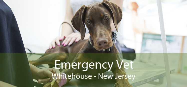 Emergency Vet Whitehouse - New Jersey