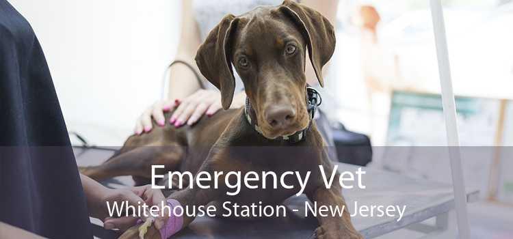 Emergency Vet Whitehouse Station - New Jersey