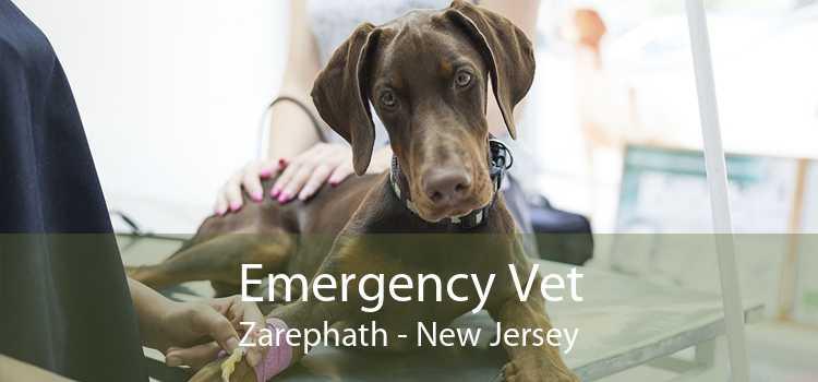 Emergency Vet Zarephath - New Jersey