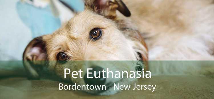 Pet Euthanasia Bordentown - New Jersey