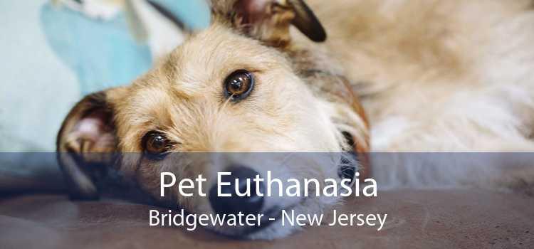 Pet Euthanasia Bridgewater - New Jersey