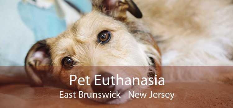 Pet Euthanasia East Brunswick - New Jersey