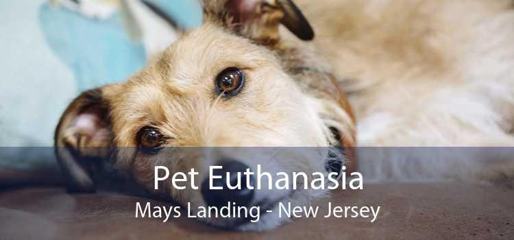 Pet Euthanasia Mays Landing - New Jersey