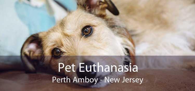 Pet Euthanasia Perth Amboy - New Jersey