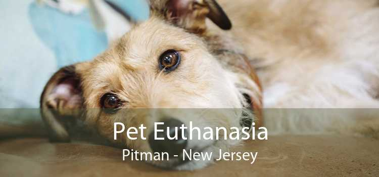 Pet Euthanasia Pitman - New Jersey