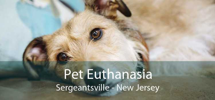 Pet Euthanasia Sergeantsville - New Jersey