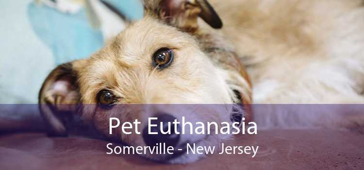Pet Euthanasia Somerville - New Jersey
