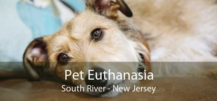 Pet Euthanasia South River - New Jersey