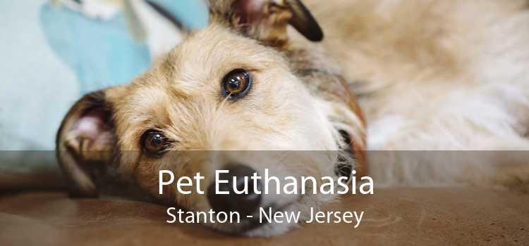 Pet Euthanasia Stanton - New Jersey