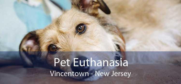 Pet Euthanasia Vincentown - New Jersey