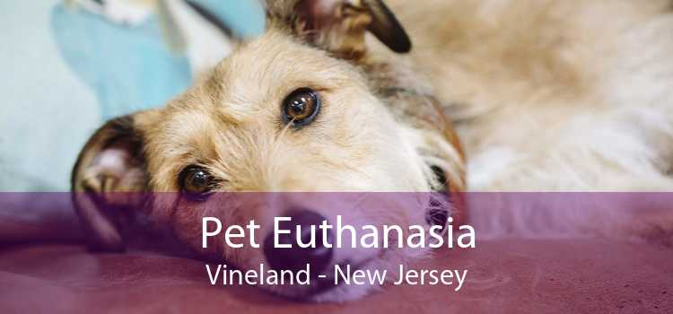 Pet Euthanasia Vineland - New Jersey