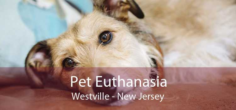 Pet Euthanasia Westville - New Jersey