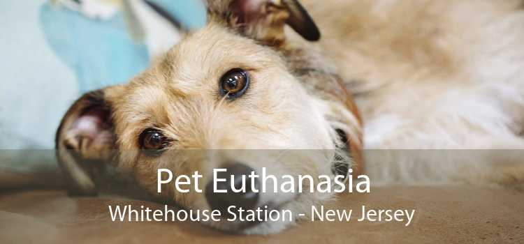 Pet Euthanasia Whitehouse Station - New Jersey