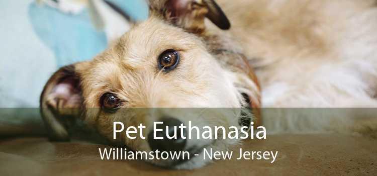 Pet Euthanasia Williamstown - New Jersey