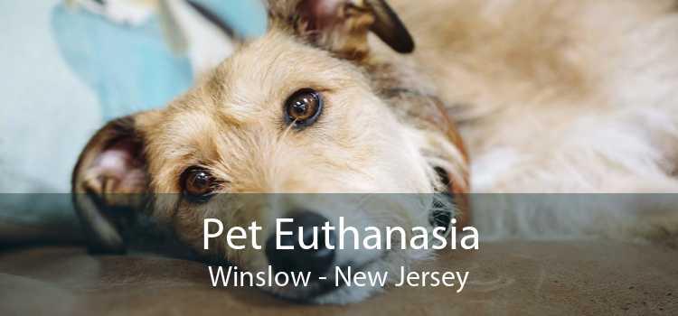 Pet Euthanasia Winslow - New Jersey