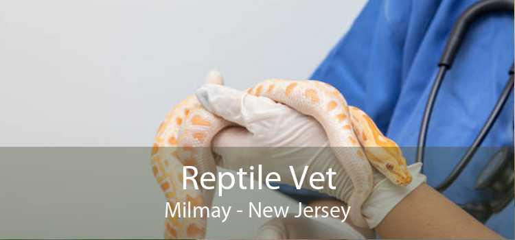Reptile Vet Milmay - New Jersey