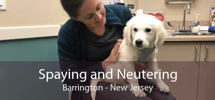 Spaying and Neutering Barrington - New Jersey