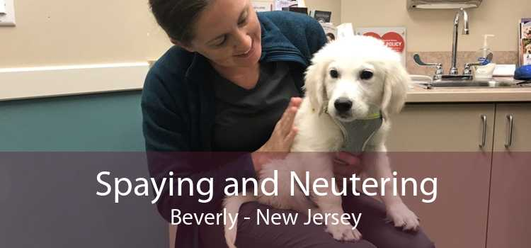Spaying and Neutering Beverly - New Jersey