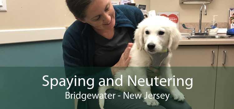Spaying and Neutering Bridgewater - New Jersey