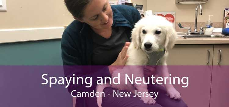 Spaying and Neutering Camden - New Jersey