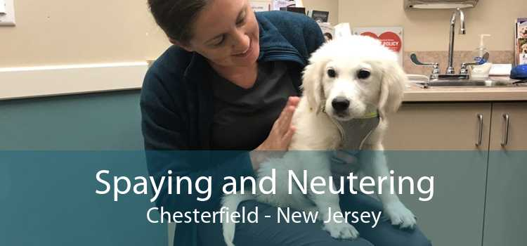 Spaying and Neutering Chesterfield - New Jersey