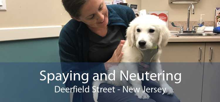 Spaying and Neutering Deerfield Street - New Jersey