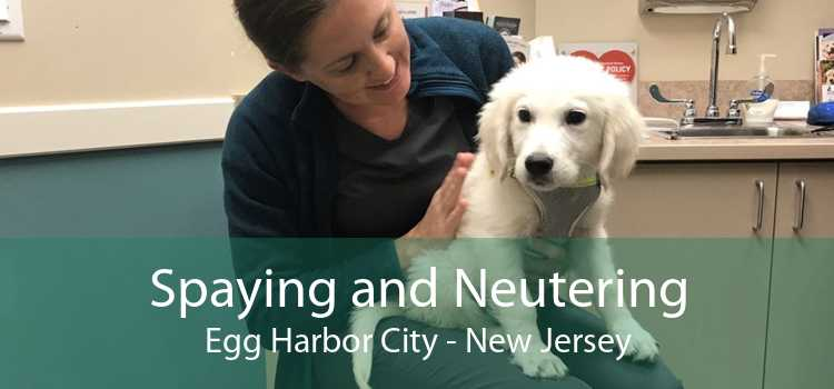 Spaying and Neutering Egg Harbor City - New Jersey