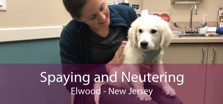 Spaying and Neutering Elwood - New Jersey