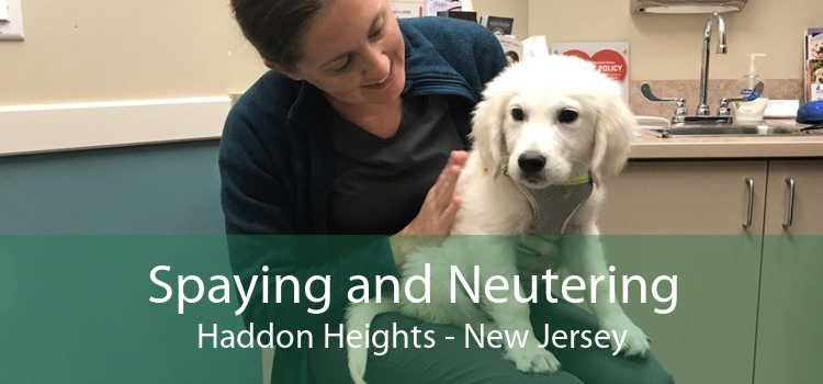 Spaying and Neutering Haddon Heights - New Jersey