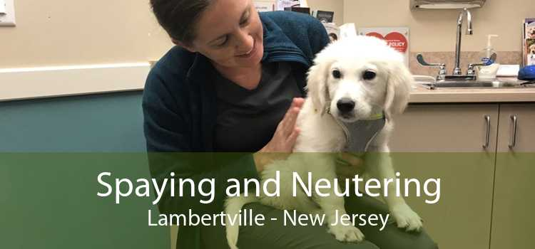 Spaying and Neutering Lambertville - New Jersey