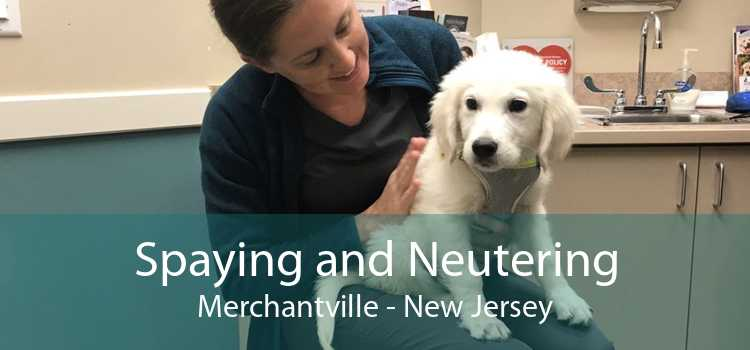 Spaying and Neutering Merchantville - New Jersey
