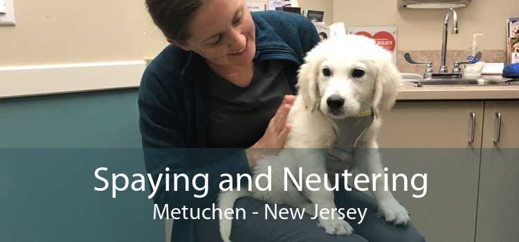 Spaying and Neutering Metuchen - New Jersey