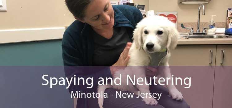 Spaying and Neutering Minotola - New Jersey