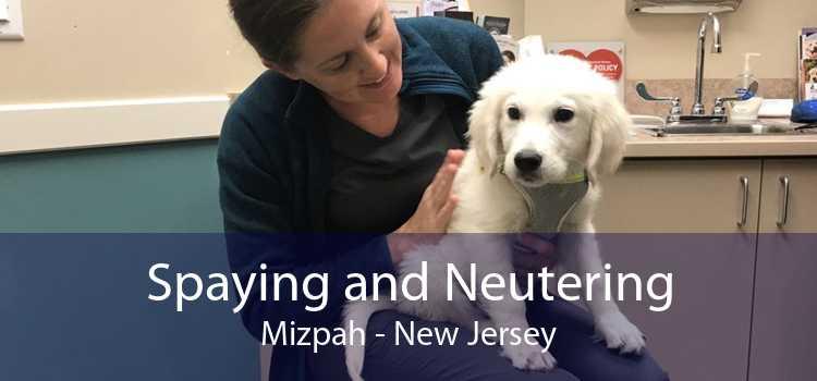 Spaying and Neutering Mizpah - New Jersey
