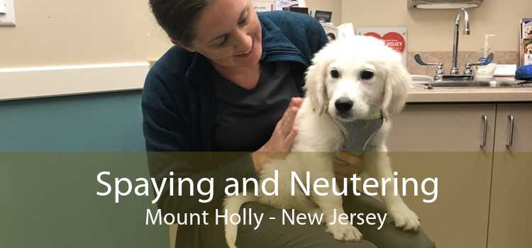 Spaying and Neutering Mount Holly - New Jersey