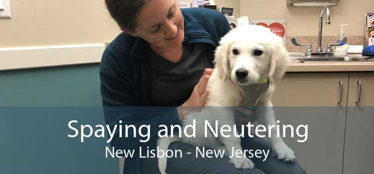 Spaying and Neutering New Lisbon - New Jersey