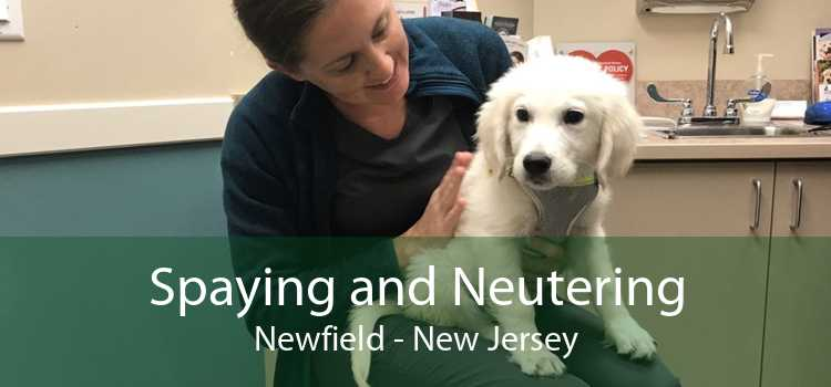 Spaying and Neutering Newfield - New Jersey