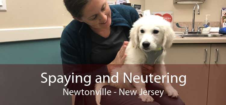Spaying and Neutering Newtonville - New Jersey