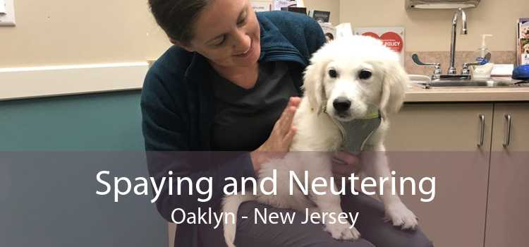 Spaying and Neutering Oaklyn - New Jersey