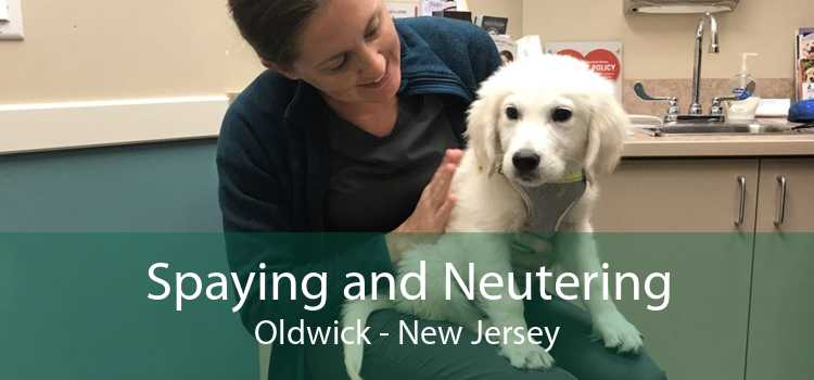 Spaying and Neutering Oldwick - New Jersey
